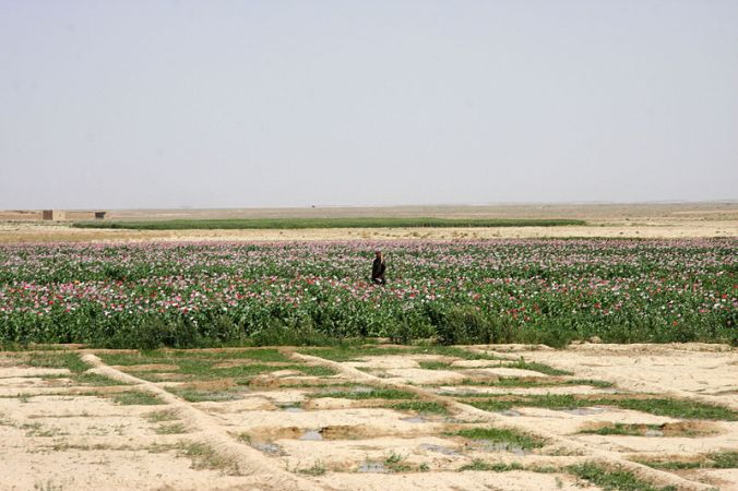 Poppy fields in Afghanistan. Source: US Marine Corps